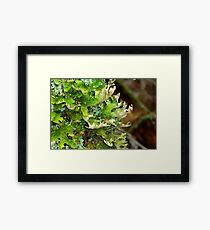 Lungwort (Lung) Lichen Framed Print