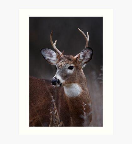 Deer boy - White-tailed Deer Art Print
