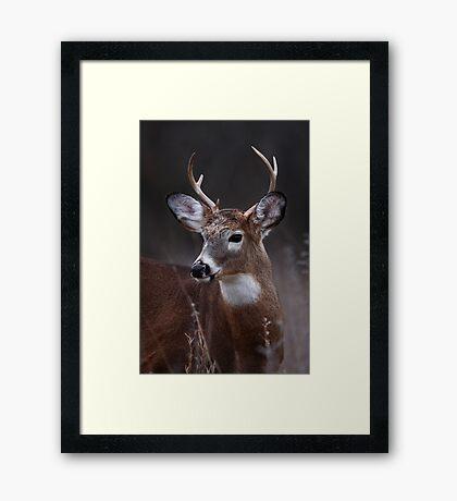 Deer boy - White-tailed Deer Framed Print