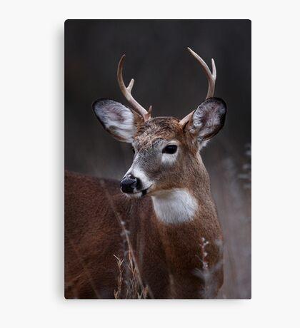 Deer boy - White-tailed Deer Canvas Print