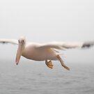 Pelican - Namibia by Pauline Adair