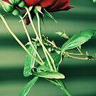Rose In Green by Emily McAuliffe
