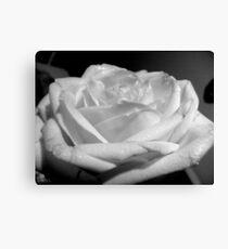 Black an white rose Canvas Print