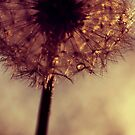 droplets of gold by Ingrid Beddoes