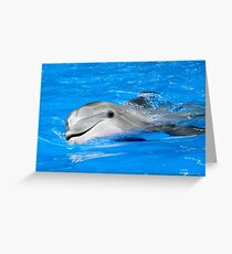 Playful Dolphin Greeting Card
