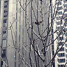 Urban Eye in New York 3 by Moniquitacute