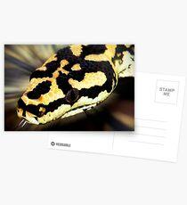 Snake,carpet python. Postcards