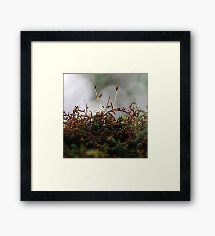 Miniscule World Framed Print