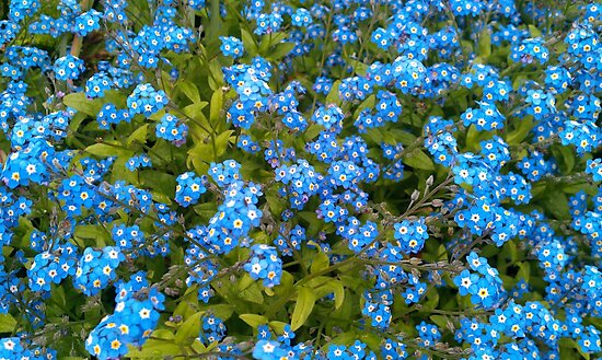 Forget me not! by DES PALMER