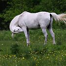 Gesundheit!! Horse by Jim Cumming