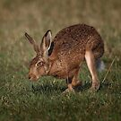 Hare On The Hop by Patricia Jacobs DPAGB BPE4