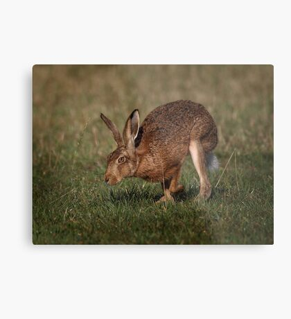 Hare On The Hop Metal Print