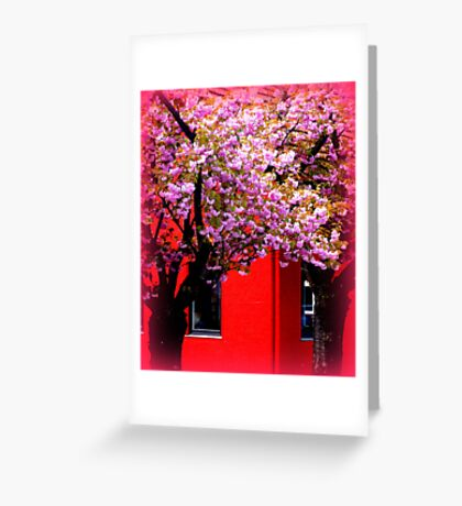 Red & Pink Greeting Card
