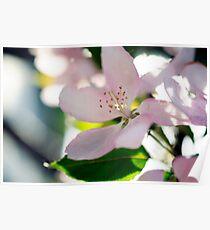 Fleurs du printemps Poster