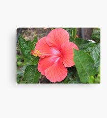 Hibiscus in the Garden Canvas Print