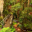 Cradle Mountain N.P. Rainforest by traveller