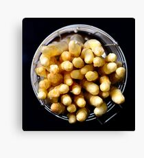 White asparagus on black Canvas Print