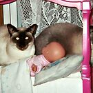 The Best Bed For A Cat Is A Doll Bed by Jane Neill-Hancock