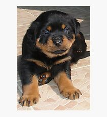 Rottweiler Puppy With Perplexed Facial Expression Photographic Print