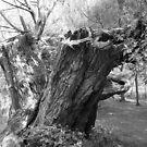 monochrome tree trunk by anfa77