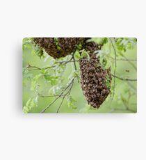 Honey Bee Swarm Canvas Print