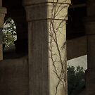 Vines Under the Bridge by Widcat