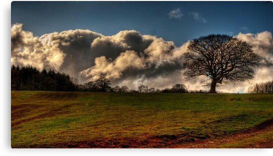 Mighty Oak with Cloudy Skies by gardencottage
