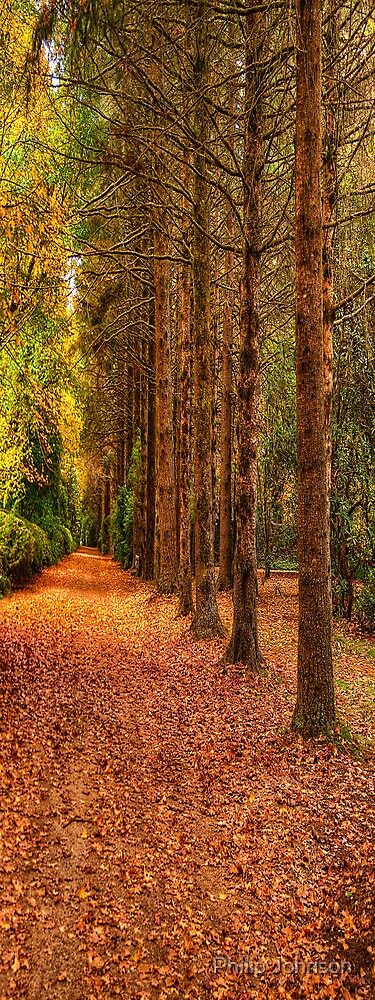 Autumn Leaves #2 - Mount Wilson, NSW - The HDR Experience by Philip Johnson