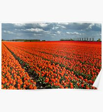 Tulipmania in Holland 3 Poster