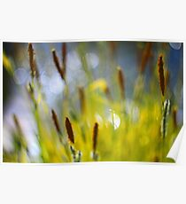 Yellow Grass with Water Highlights Poster