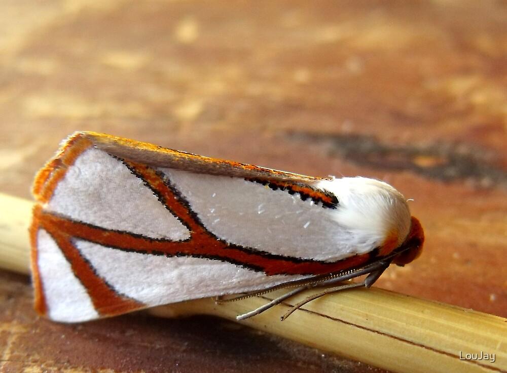 Clara's Satin Moth by LouJay