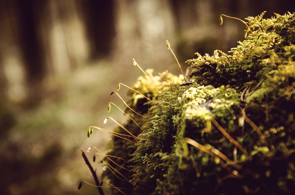 Ladybower Moss At Dawn by Arran Cross
