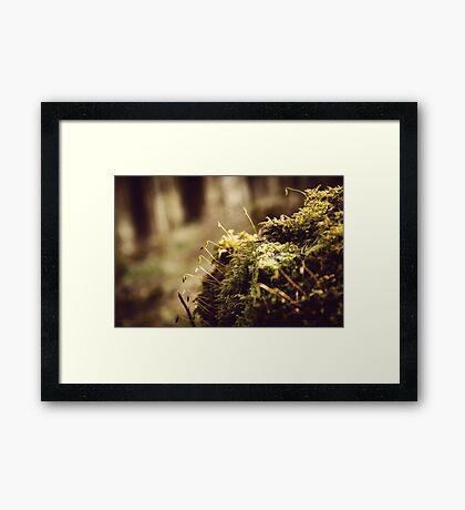 Ladybower Moss At Dawn Framed Print
