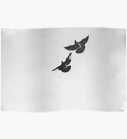 Kelham Island Pigeons At Dawn Poster