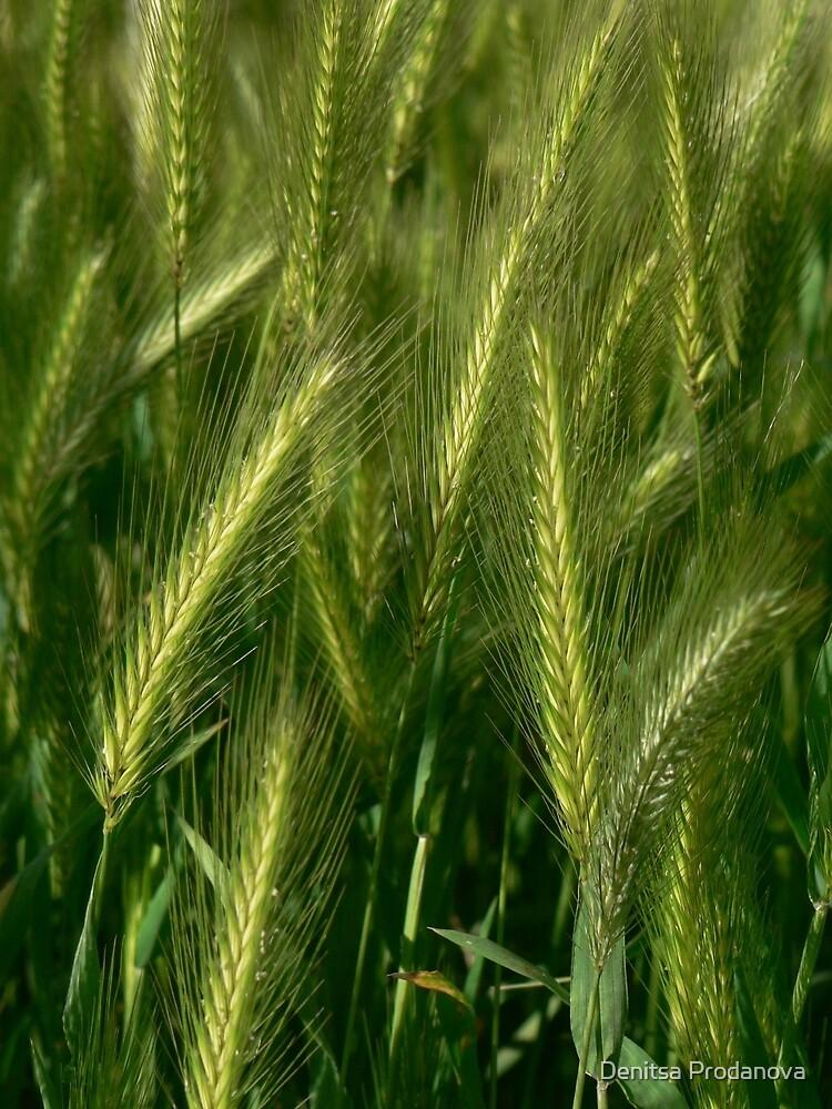 Grass by Denitsa Prodanova
