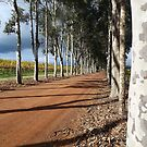 Avenue of Trees by Maureen Smith