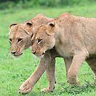 Sisterly affection! by Anthony Goldman