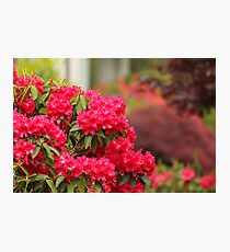 Gardening in Red Photographic Print