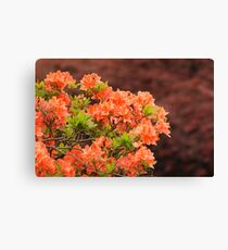 Peach Profusion Amid a World of Brick Red Canvas Print