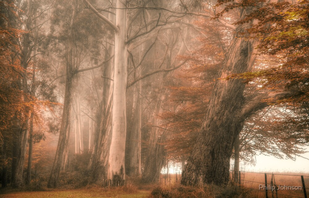 Monarchs of The Bush - Mount Wilson - NSW  - The HDR Experience by Philip Johnson