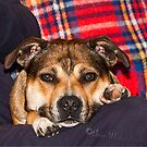 Megan my Staffy by Elaine123