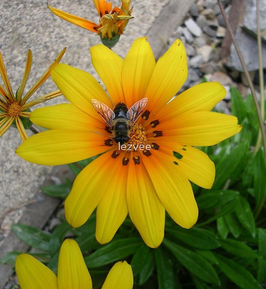 Bee on yellow flower by lezvee