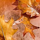 """""""Frozen Gold"""" by martinilogic"""