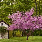 American Red Bud Tree by Penny Fawver