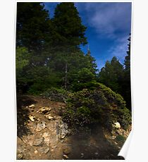 spring time in the Siskiyou mountains Poster
