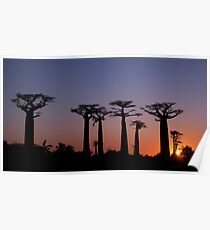 Baobab Gasse, Madagaskar Poster