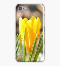 Yellow crocus (iPhone) iPhone Case/Skin