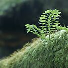 Dartmoor Fern by Sally Barnett