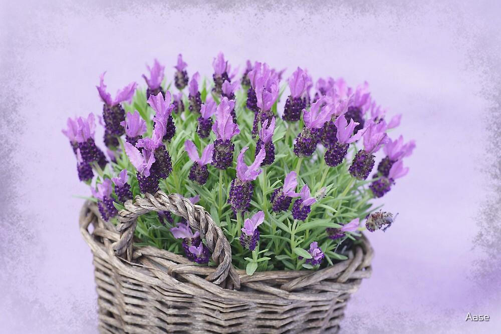 Purple Flowers by Aase