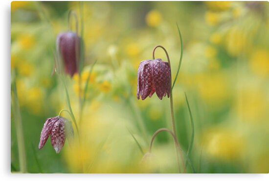 Meadow in bloom at Downton Abbey by miradorpictures